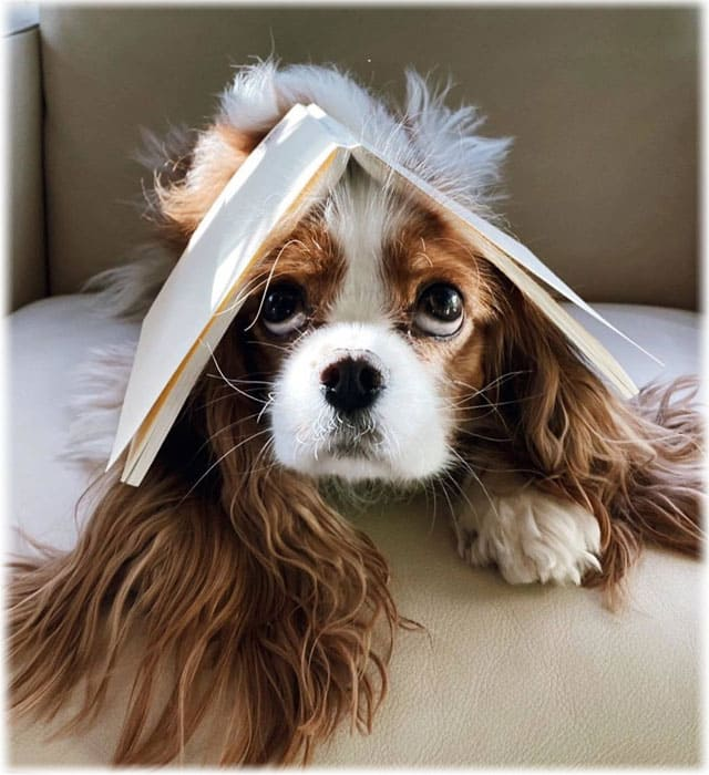 Cavalier King Charles Spaniels Health Problems